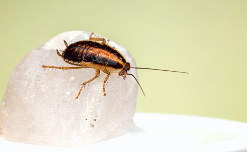 Pest exterminator